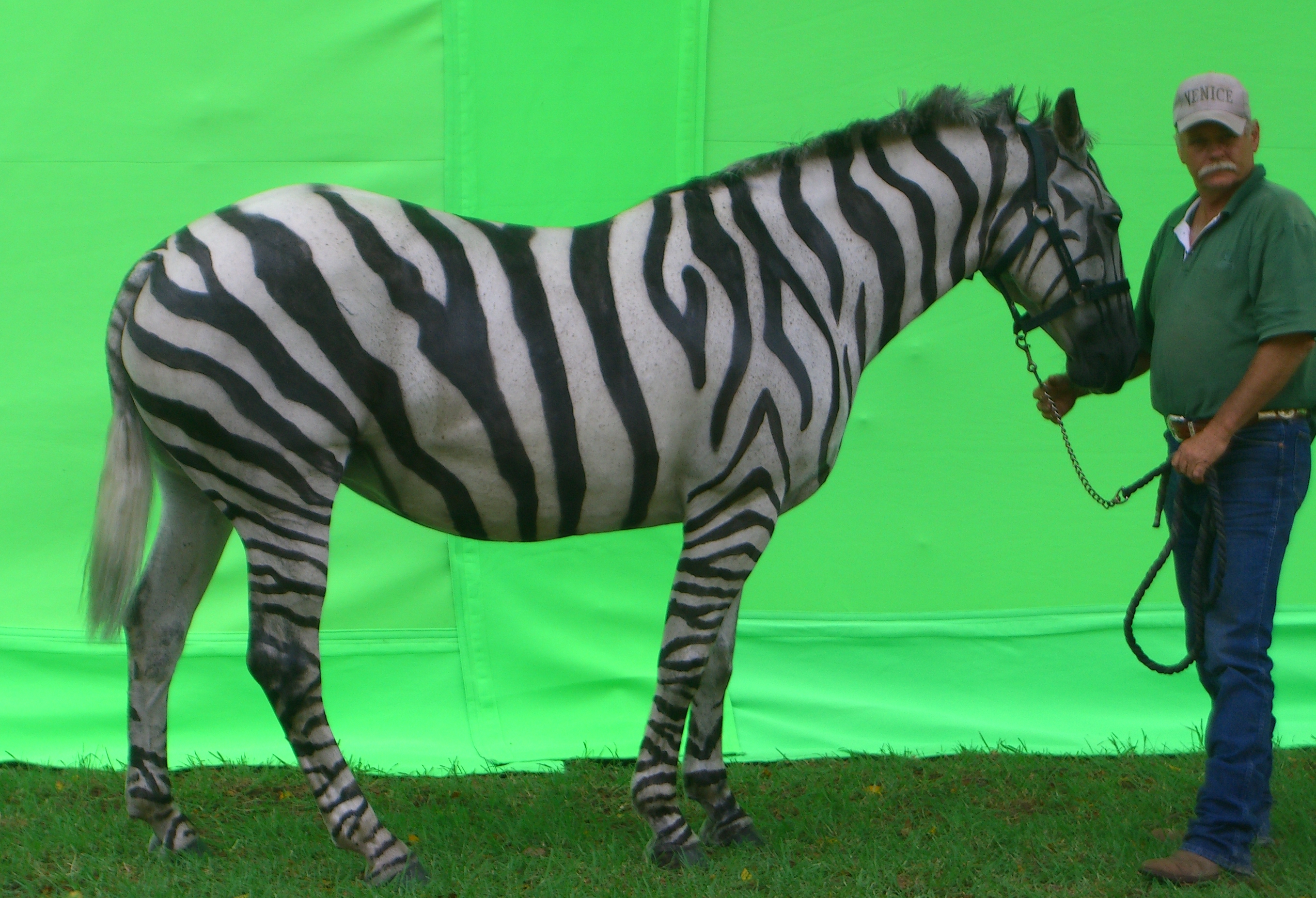 Horse painted as a zebra LG TVC